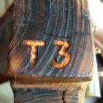 T3 è il nome del trottulele ospite di questa puntata di Rigonia