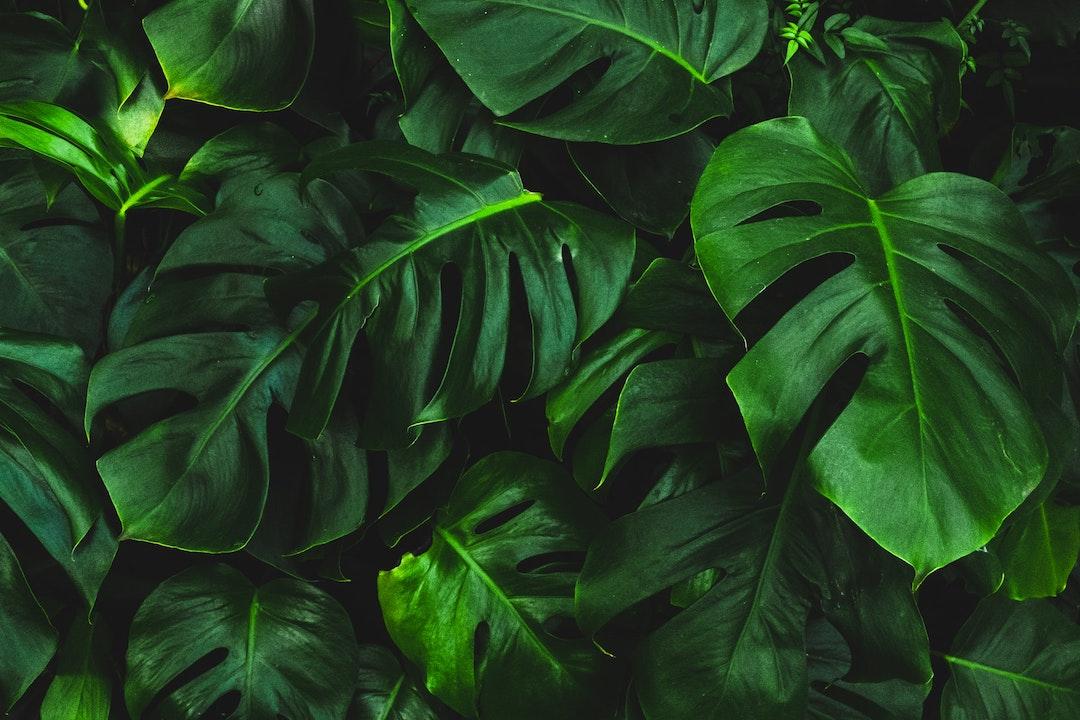 Dai film alle piante: il viaggio sonoro di Pilato con Enzo Cimino